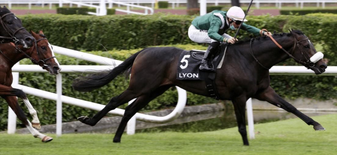 Goldtrip: candidat pour le Jockey Club